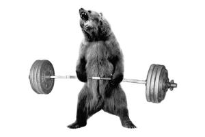 bearcomplex